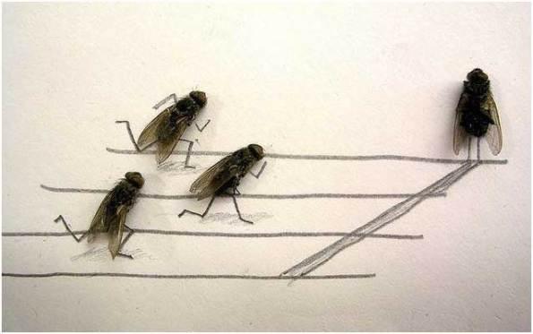 lalat1