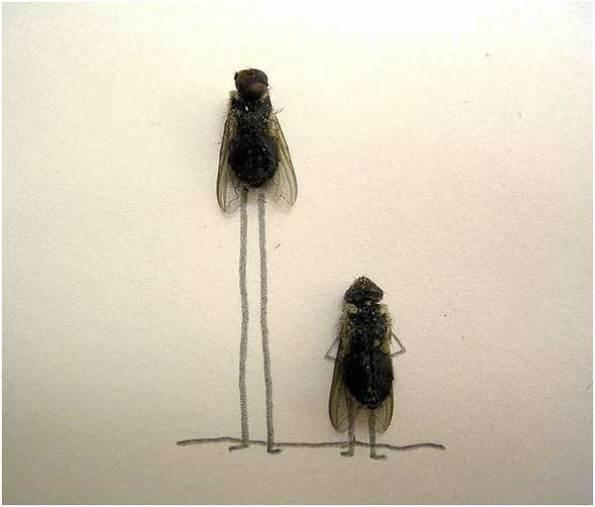 Lalat Tertinggi