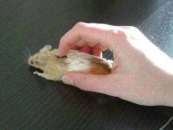 The Weird Mouse